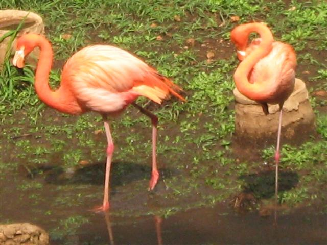flamingo_%28Small%29.jpg